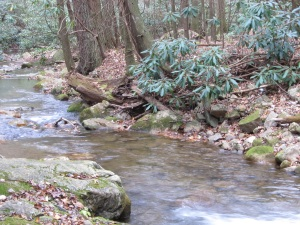 Horse Creek, Cherokee National Forest, TN