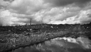 grassy-narrows-logging-2