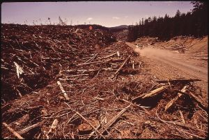 800px-CLEAR-CUTTING_OF_CEDAR_TREES_IN_THE_TAHALA_UNIT_OF_THE_QUINAULT_INDIAN_RESERVATION__THE_INDIANS_MAINTAIN_THAT_THIS____-_NARA_-_545272